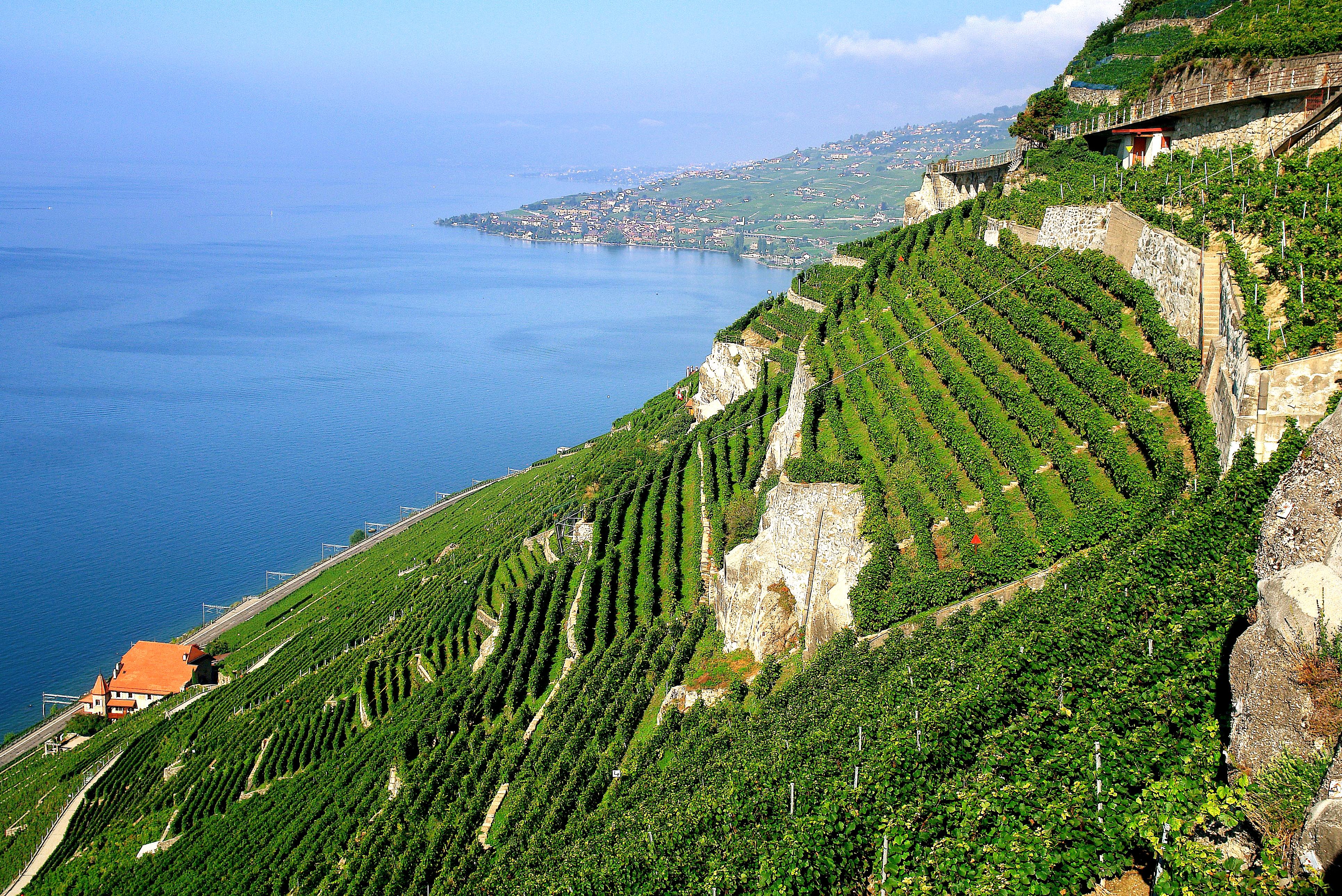 Les vignobles en terrasse avec vue sur le lac